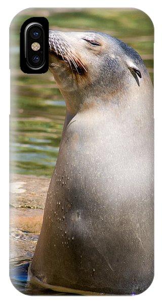 Sea Lion Portrait IPhone Case