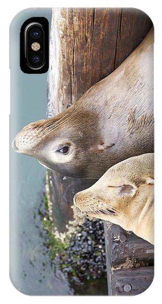 Sea Lions Phone Case by Ashley Balkan