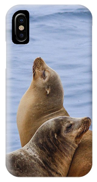 Sea Lions Phone Case by Jill Bell