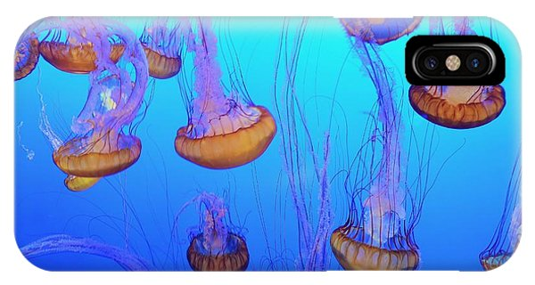 Sea-nettle Jelly Fish  IPhone Case
