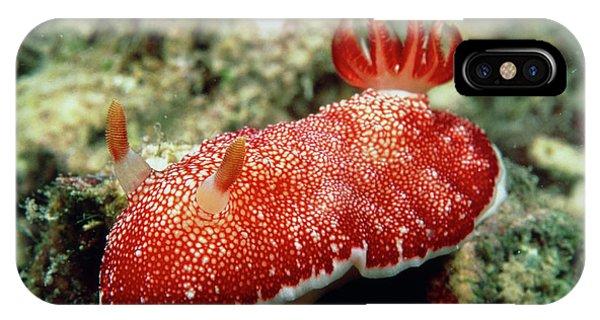Sea Floor iPhone Case - Sea Slug by Matthew Oldfield/science Photo Library