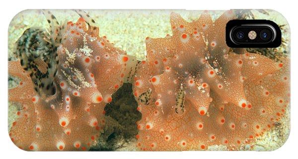 Sea Floor iPhone Case - Sea Slugs Mating by Matthew Oldfield/science Photo Library