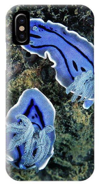 Sea Floor iPhone Case - Sea Slugs by Matthew Oldfield/science Photo Library