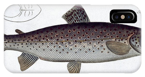 Ichthyology iPhone Case - Sea Trout by Andreas Ludwig Kruger