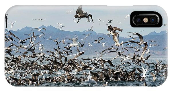 Boobies iPhone Case - Seabirds Feeding by Christopher Swann