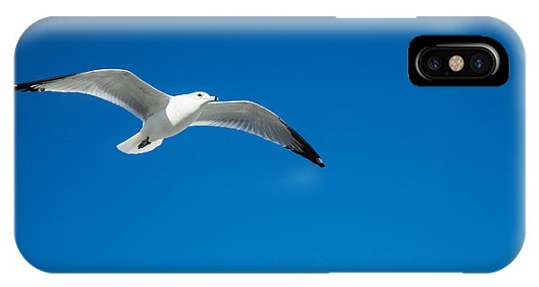 Seagull In Blue Skies Phone Case by Mina Isaac