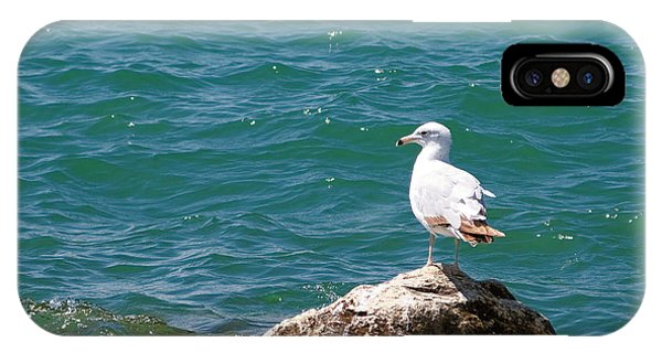 Seagull On Rock IPhone Case