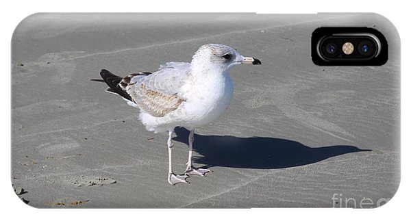 Seagull On The Hunt IPhone Case