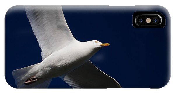 Seagull Underglow IPhone Case