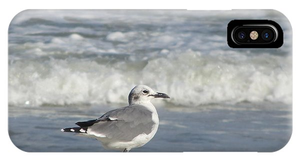 Seagulls At Fernandina 6 IPhone Case