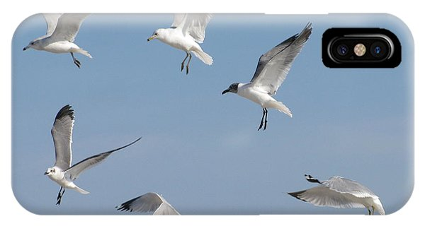 Seagulls See A Cracker IPhone Case
