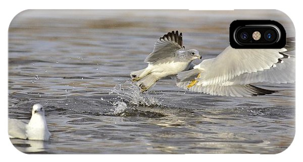 Seagulls Take Off IPhone Case