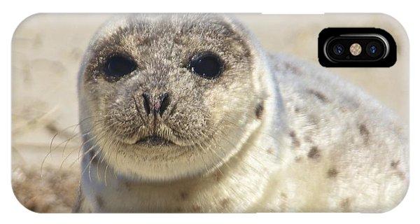 Seal  IPhone Case