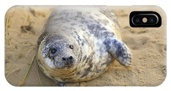 Seal Pup On The Beach IPhone Case