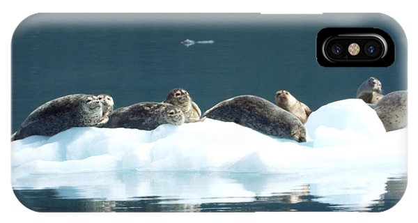 Seal Reflections IPhone Case
