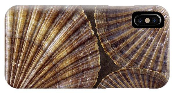 Seashells Spectacular No 7 IPhone Case