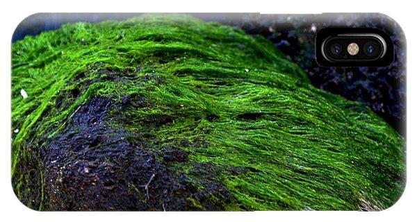 Seaweed Phone Case by Victoria Clark