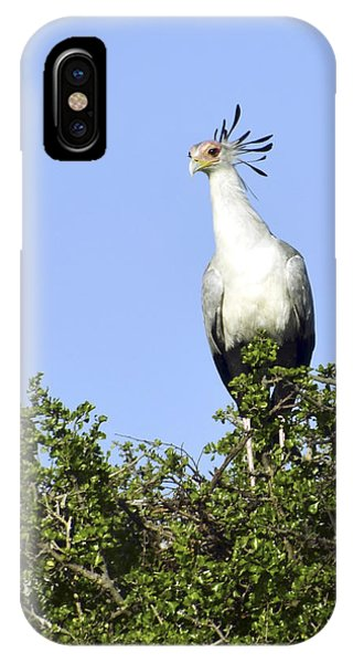 Secretary Bird Portrait IPhone Case
