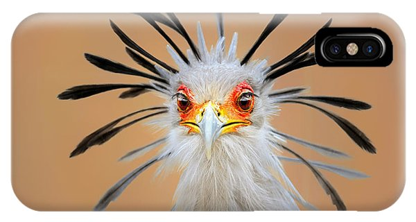 Colourful iPhone Case - Secretary Bird Portrait Close-up Head Shot by Johan Swanepoel
