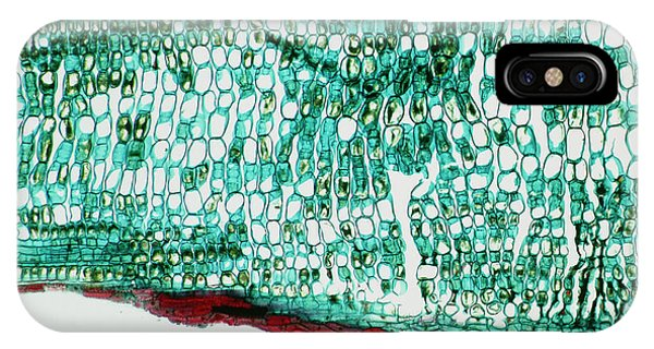 Spruce iPhone Case - Section Through A Spruce Leaf by Alfred Pasieka/science Photo Library