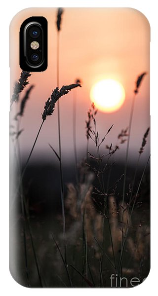 Seed Heads At Sunset IPhone Case