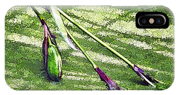 Seedpods In Pond Moss IPhone Case