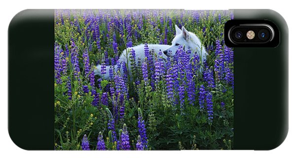 IPhone Case featuring the photograph Sekani In Lupine by Sean Sarsfield