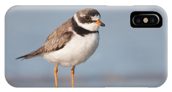 Semipalmated Plover IPhone Case