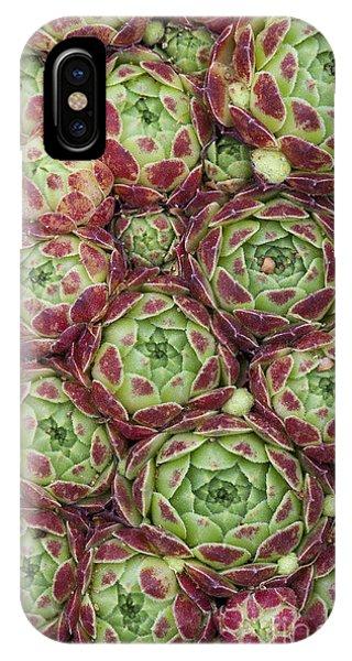 Succulent iPhone Case - Sempervivum Atlanticum Pattern by Tim Gainey