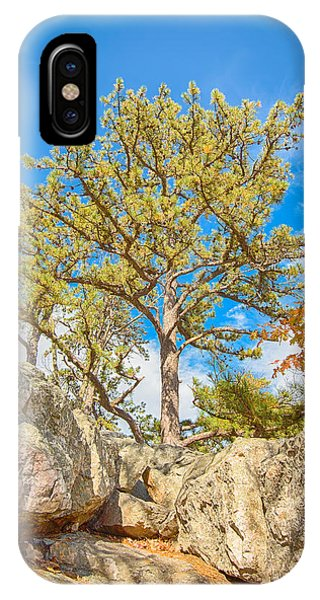 Catoctin Mountain Park iPhone Case - Sentinel Pine - Catoctin Mountain Park - Md by Steve Lagreca