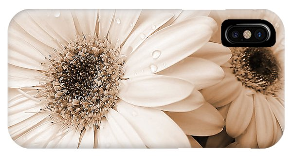 Monotone iPhone Case - Sepia Gerber Daisy Flowers by Jennie Marie Schell