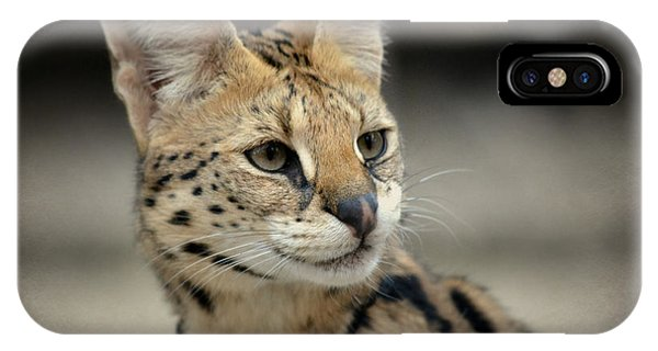 Serene Serval IPhone Case