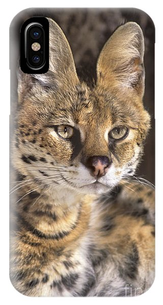IPhone Case featuring the photograph Serval Portrait Wildlife Rescue by Dave Welling