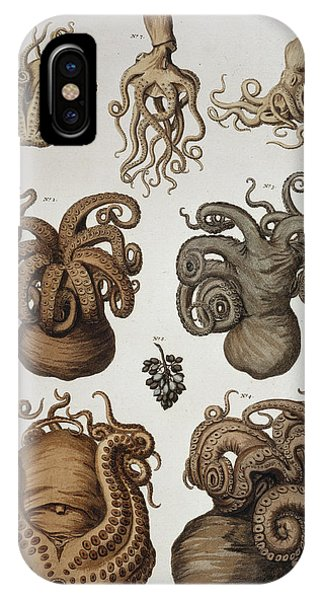 Squid iPhone Case - Seven Squid And Octopuses by Natural History Museum, London