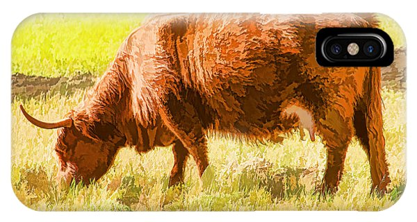 Shaggy Scottish Highlander IPhone Case