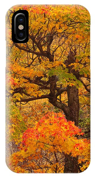 Shapely Maple Tree IPhone Case