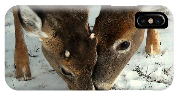 White Tailed Deer iPhone Case - Sharing The Love by Tami Quigley