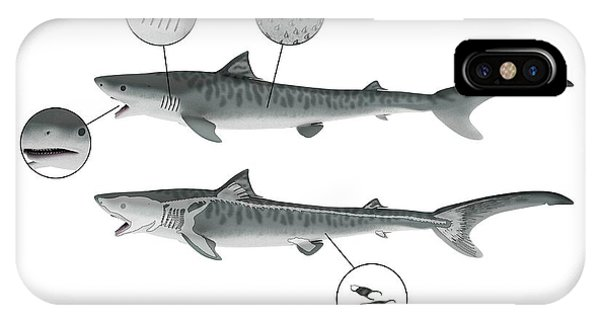 Shark Anatomy Photograph by Mikkel Juul Jensen