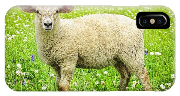 Grass iPhone Case - Sheep In Summer Meadow by Elena Elisseeva