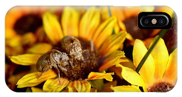 Shell Of A Bug On Flower IPhone Case