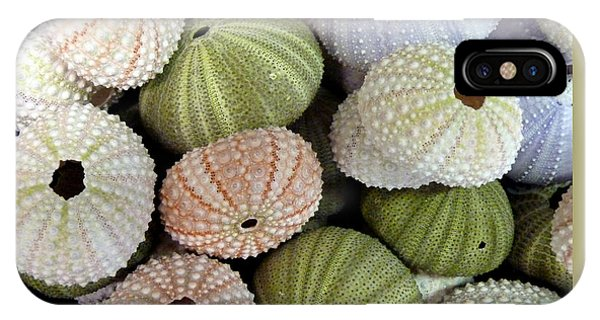 Wakulla iPhone Case - Shells 5 by Carla Parris