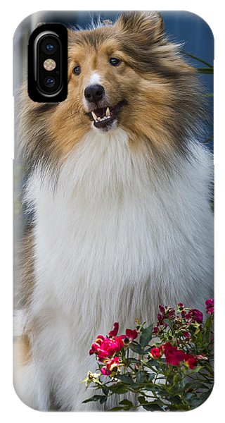 Sheltie IPhone Case