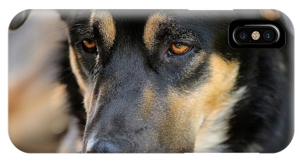 Shepherd Face IPhone Case