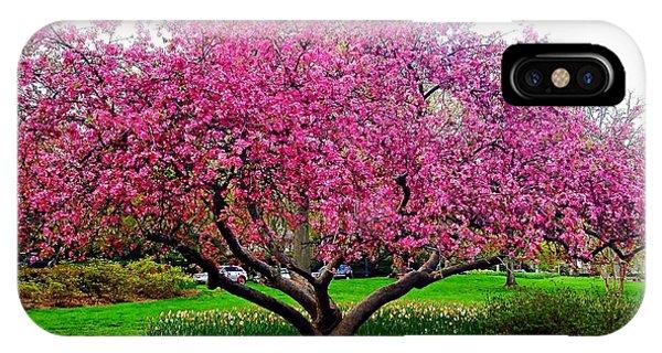 Sherwood Gardens Tree IPhone Case