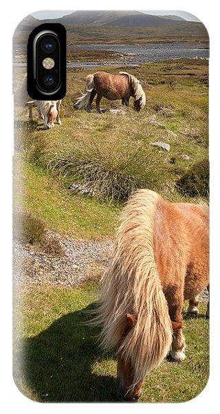 Shetland Ponies IPhone Case