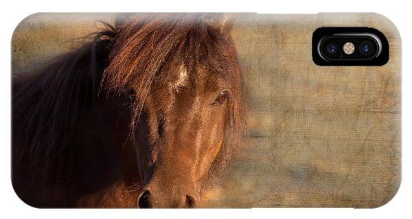 Shetland Pony At Sunset IPhone Case
