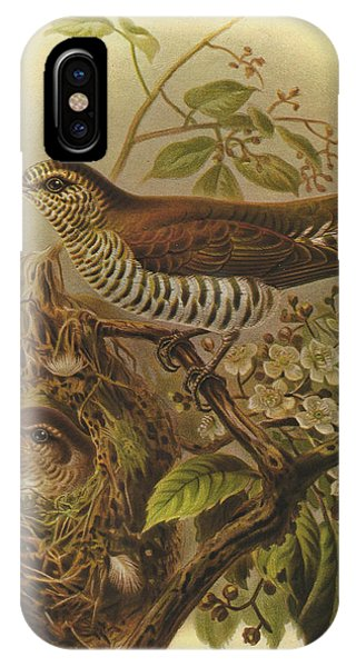 Cuckoo iPhone Case - Shining Cuckoo by Dreyer Wildlife Print Collections