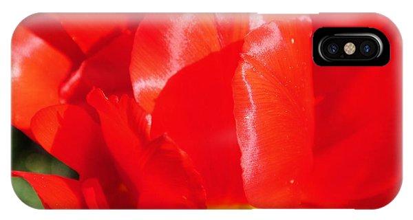 Shining Tulip IPhone Case