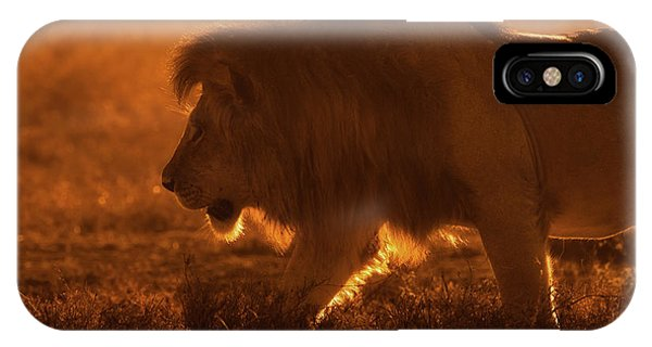Lions iPhone Case - Shiny King by Mohammed Alnaser