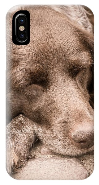 Shishka Dog Dreaming The Day Away IPhone Case